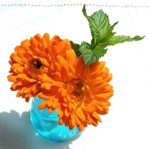 摘みたてのハーブの花、カレンデュラをたまには飾ってみたり…。