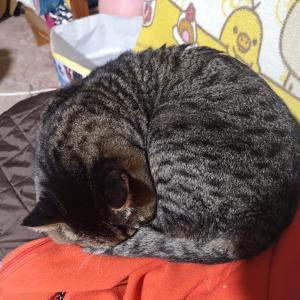 猫にオシッコかけられる(T-T)