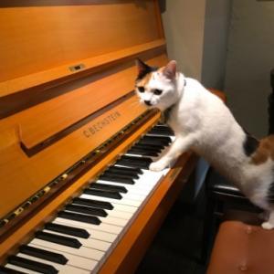 ピアノの美音と絵の個展/猫と本と絵とベヒシュタイン