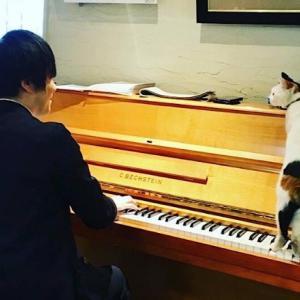 コロナ禍の生演奏の価値/学び磨いたタッチでベヒシュタインを弾く