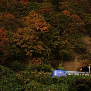 紅葉の中の青列車