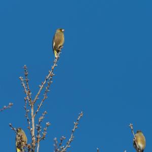 枝先で器用に止まる鳥