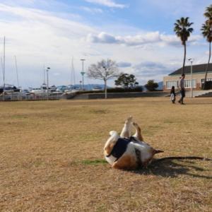 犬連れ車中泊~広島編その2Y(・∀・)Y