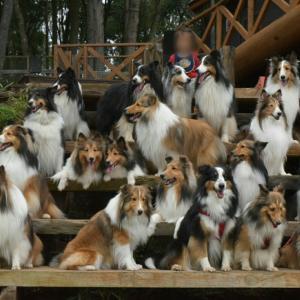 犬森に沢山のお友達が集まったよ~