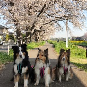 あれから3年/桜の季節