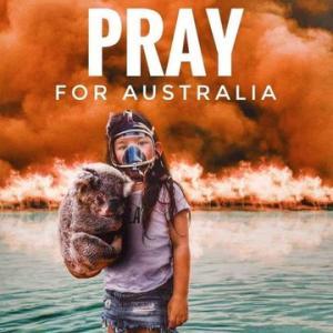 オーストラリア山火事、スーパージュニアがコアラたちの里親に!