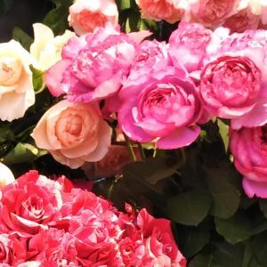 バラの花は 好きですか?