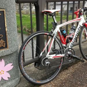 カタクリの花と桜の開花状況を観に行く♪