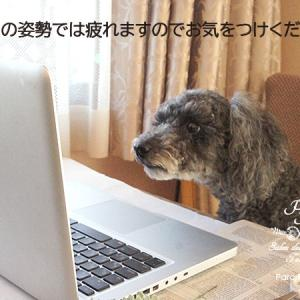 ノアちゃんもオンライン♪