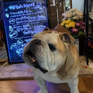 1/19(日)大阪開催『犬の整体・マッサージ教室』【プラクティカルコース】セミナー