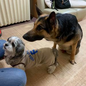 2/17(月)その2『犬の整体・マッサージ教室』【再受講】