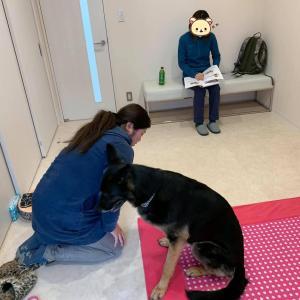 3/27(金)埼玉県開催『犬の整体・マッサージ教室』【基本】セミナー