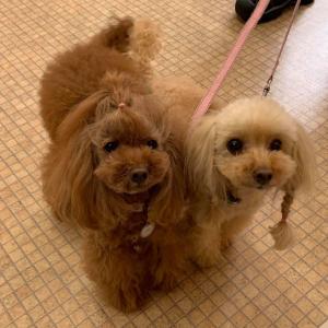 神奈川県開催『犬の整体・マッサージ教室』【プラクティカルコース】セミナー《6/21(日)》
