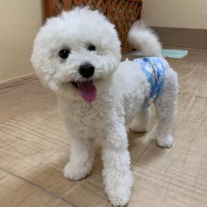 10/24(土)『犬の整体・マッサージ教室』【基本マッサージコース】