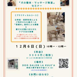 神奈川県開催『犬の整体・マッサージ教室』【プラクティカル】セミナー《告知》