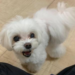 5/10(月)『犬の整体・マッサージ教室』【基本マッサージコース】