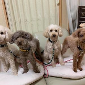 5/13(木)『犬の整体・マッサージ教室』【サポートマッサージコース】