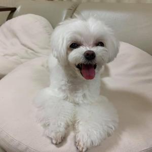 5/17(月)その1『犬の整体・マッサージ教室』【サポートマッサージコース】