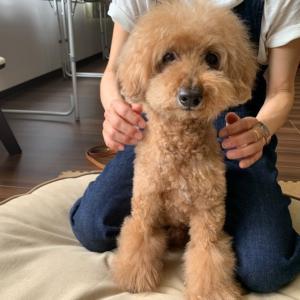 5/24(月)『犬の整体・マッサージ教室』【サポートマッサージコース】5組同時受講
