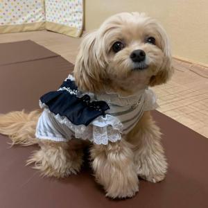5/31(月)『犬の整体・マッサージ教室』【サポートマッサージコース】