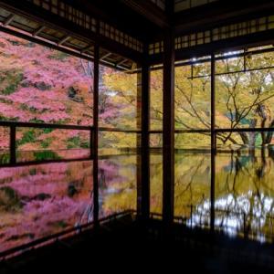 京都・瑠璃光院 ①