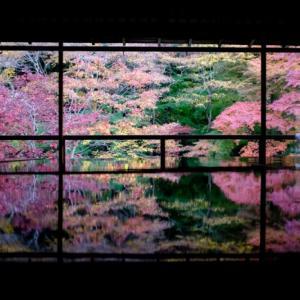 京都・瑠璃光院 ②