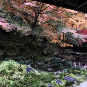 京都・瑠璃光院 ③