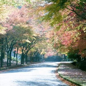 秋の光いっぱい