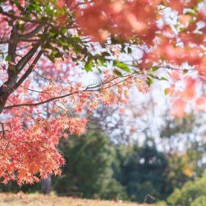 秋は続くよ・・・