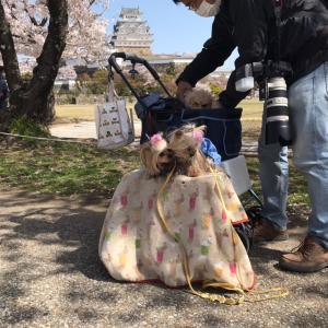 偶然な姫路城