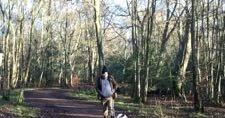 霜が降りた森で散歩