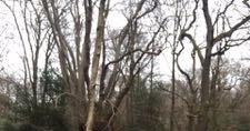 外出禁止前の森の散歩