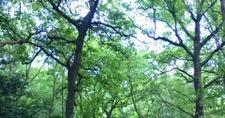 約2ヶ月振りの森