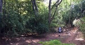 散歩しながら森林浴