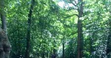 長女も一緒に森の散歩