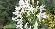 義母の花や家庭菜園