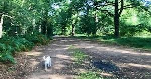 森で見かけたキノコたち♪