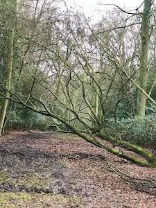嵐のあとの森の散歩
