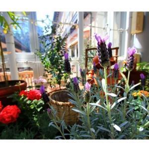 鉢植え植物は室内の空気をきれいにする?~ヘルスデーニュース~