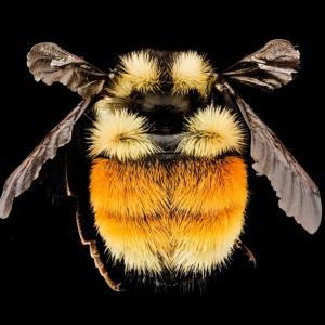 食料難のハチは葉っぱを傷付けて花を咲かせる、驚きの戦略~ナショナルジオグラフィック~