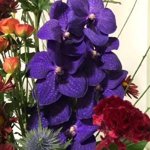 バンダの魅力的な紫色に惹かれます