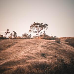 【セルフリーディング】道なき道を歩むために「ガルバナム」