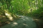梨の木峠から甲斐百山甲府名山「八王子山」に登り和田峠に下る
