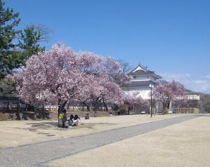 甲府城四季巡り 桜の花咲く 令和3年3月26日