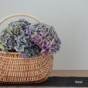 秋色紫陽花を飾る。