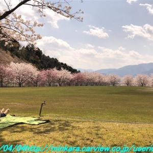 コロナの春💦・・・( ノД`)シクシク…🌸