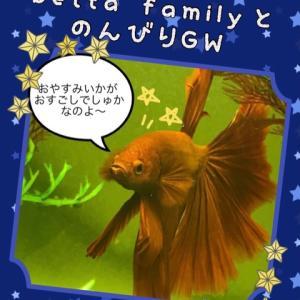 betta familyとのんびりGW