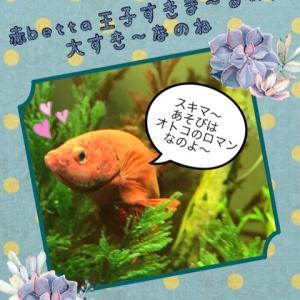 赤betta王子すきま〜るのが大すき〜なのね