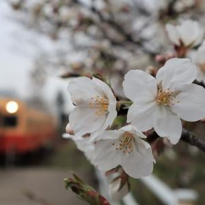 長い戦いの果てに春はまた来るだろう。