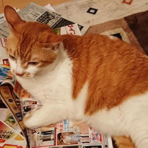 一日一猫。そして長崎はいかが?